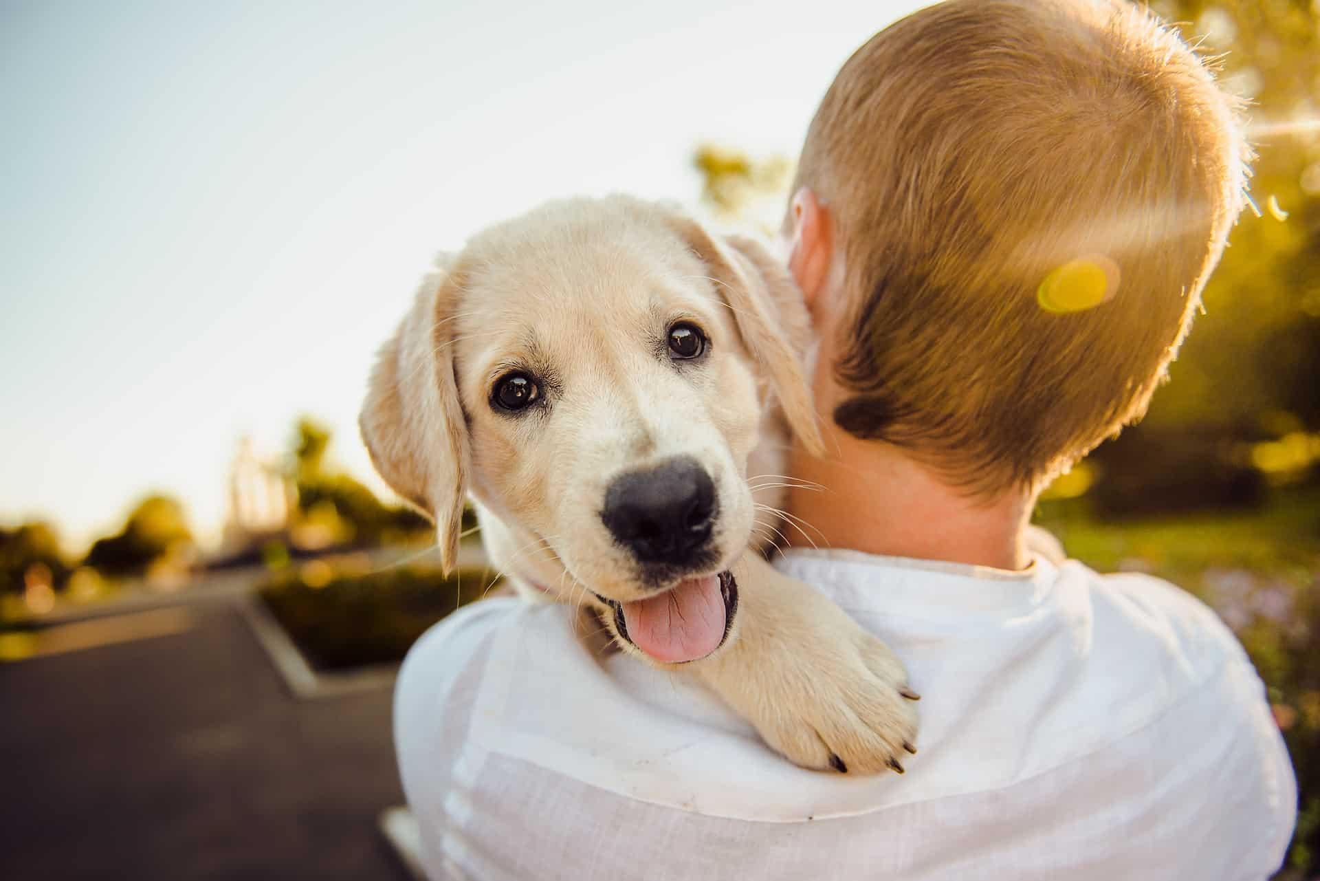 Choosing pet insurance for a dog