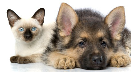 Cute dog and cat with insurance