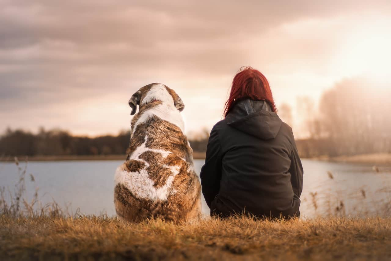 The best pet insurance of 2019